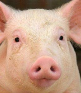 срок годности мясных продуктов