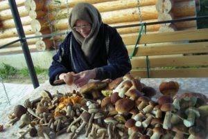 Штраф за сбор грибов и ягод планитуют отметить