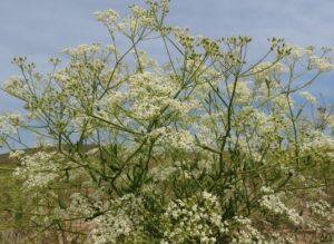 Незаконная заготовка дикорастущих растений вСибири набирает обороты