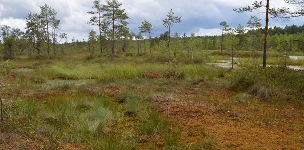 Одно из мест, где можно собрать живой мох сфагнум